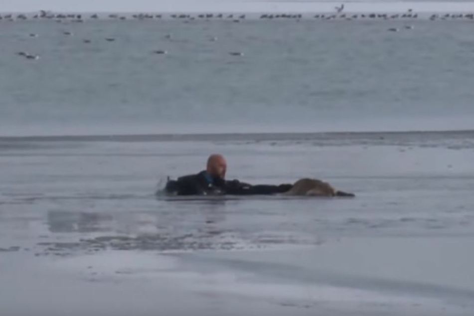 Ein Polizeitaucher gab alles, um den hilflosen Hund zu retten.