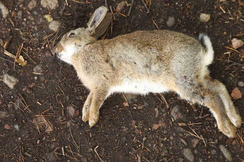 Unfassbar! 38 tote Kaninchen mit abgeschnittenen Ohren entdeckt