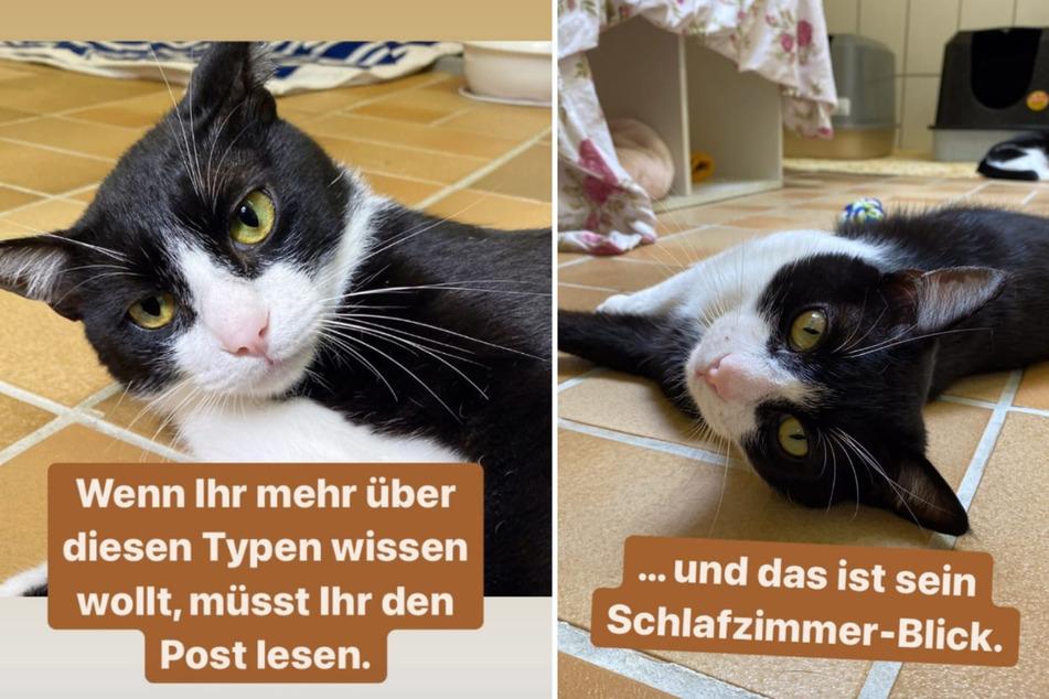 """Kater """"Don Gato Jumilla"""" wartet im Tierheim Köln-Dellbrück auf seine Adoption. (Fotomontage)"""