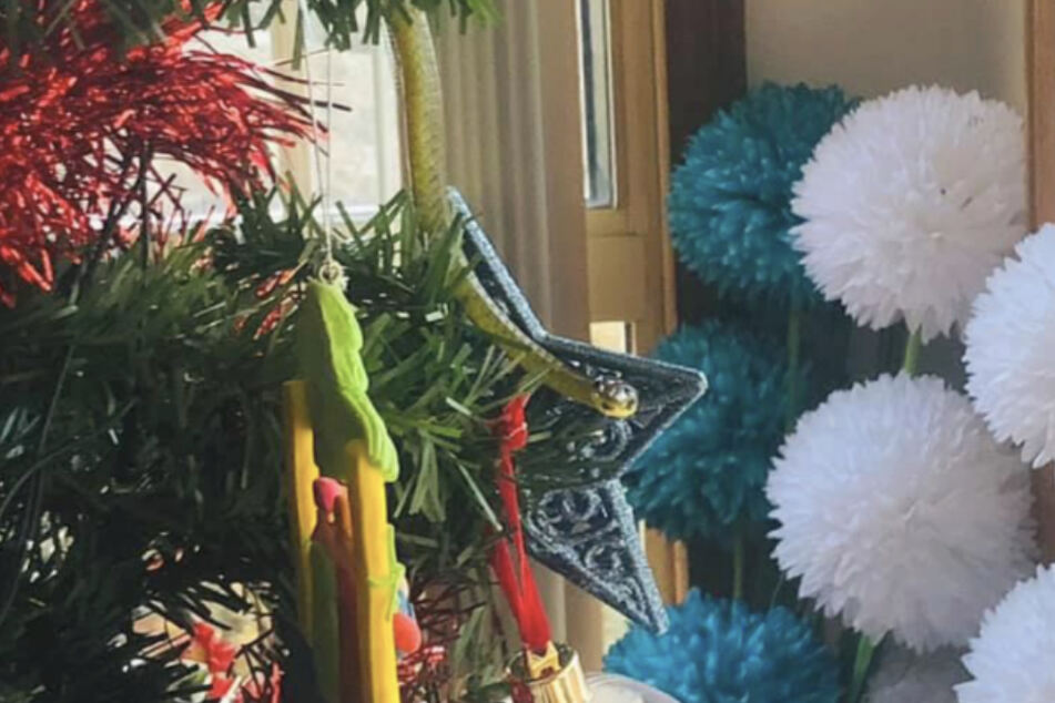 Rachael Leah Jackson (42) discovered a snake on her Christmas tree.