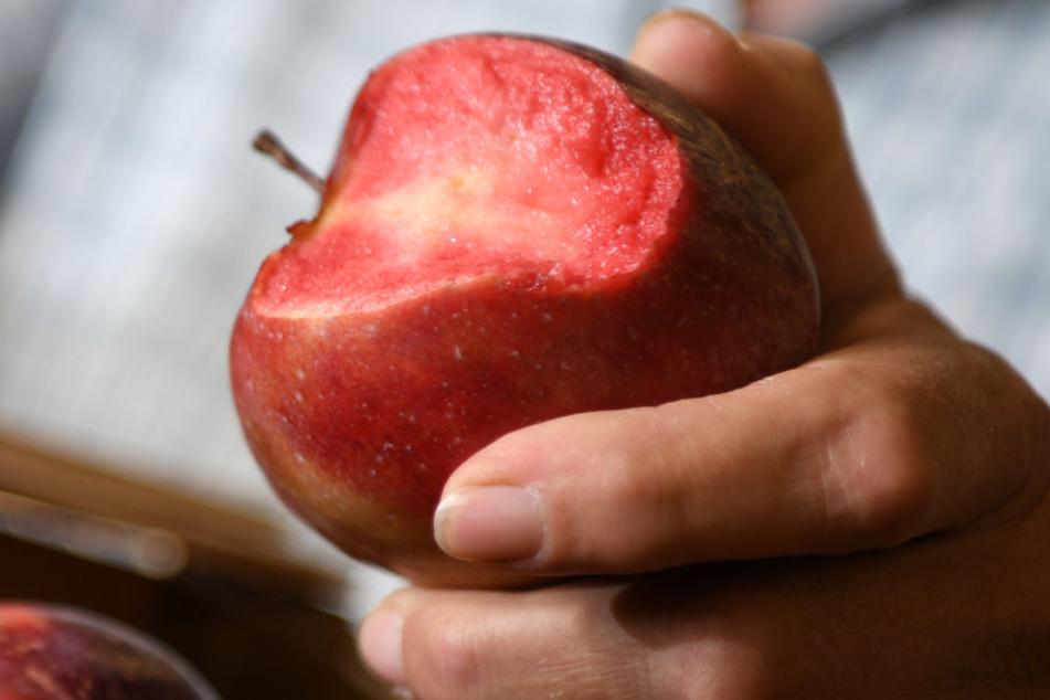 Die bislang namenlose Apfelsorte mit rotem Fruchtfleisch.
