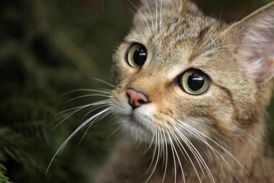 Unglaublich! Tierquäler wirft zwei Katzen aus dem Fenster