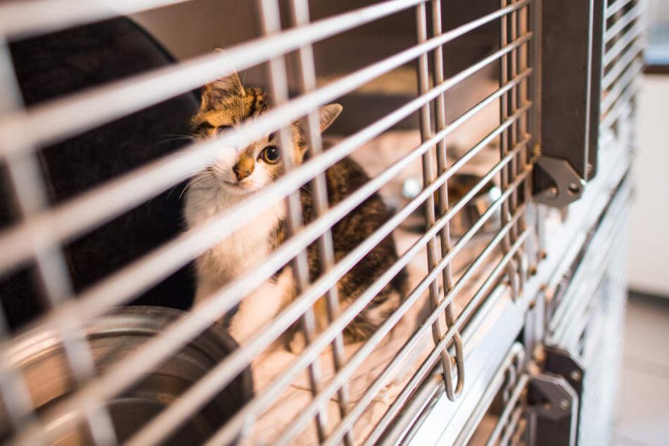 """Beim """"animal-hoarding"""" werden Dutzende Tiere, zum Beispiel Katzen, auf engstem Raum zusammen gehalten. Am Ende landen sie dann meist im Tierheim."""