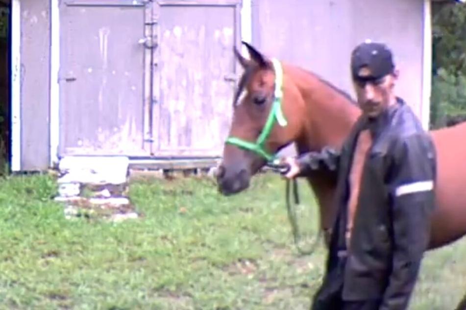 Mann bricht mit Pferd in Haus ein! Unglaublich, welche Geschichten er dann der Polizei auftischt