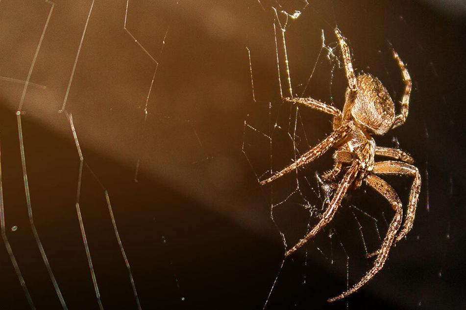 Horror-Crash! Frau verliert wegen Spinne Kontrolle über das Auto, ihr Sohn (11) stirbt