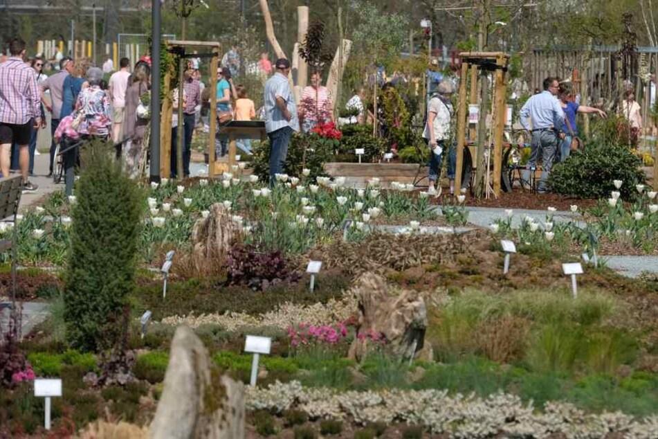 Schon am Wochenende stürmten fast 2000 Besucher die Landesgartenschau in Frankenberg.
