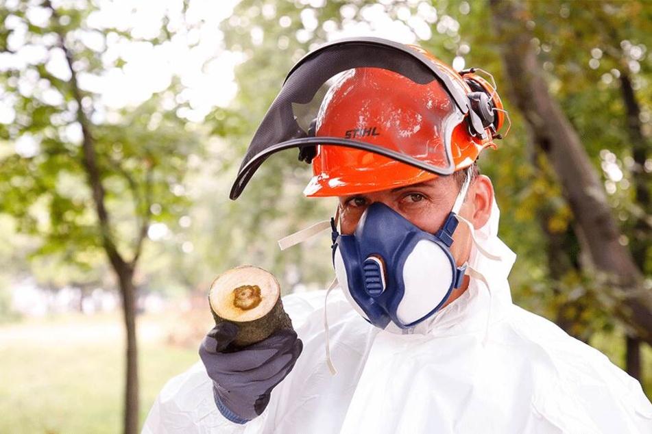 Ein Mitarbeiter der Firma Cityforest in Schutzkleidung zeigt einen bruchgefährdeten Stamm.