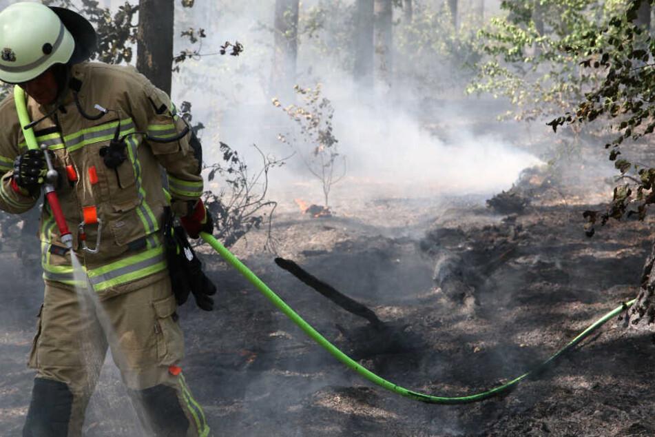 Feuer am Teufelsberg: Großbrand in Grunewald ausgebrochen
