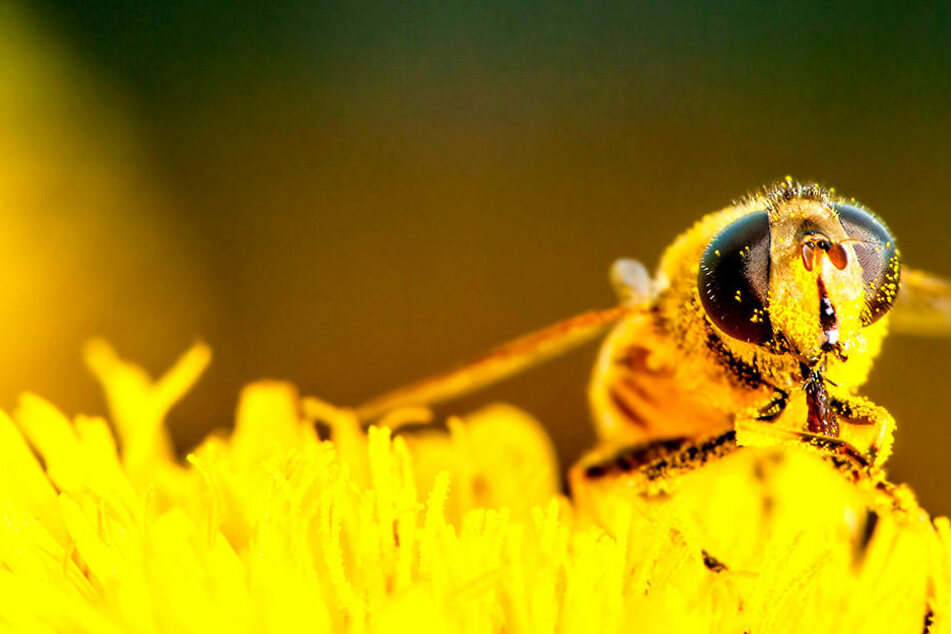 In der Apitheraphie werden Bienenprodukte zur Heilung eingesetzt.