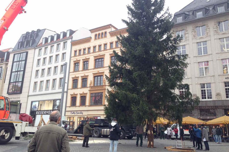 Er steht! Feuerwehr setzt Weihnachtsbaum auf den Leipziger Marktplatz