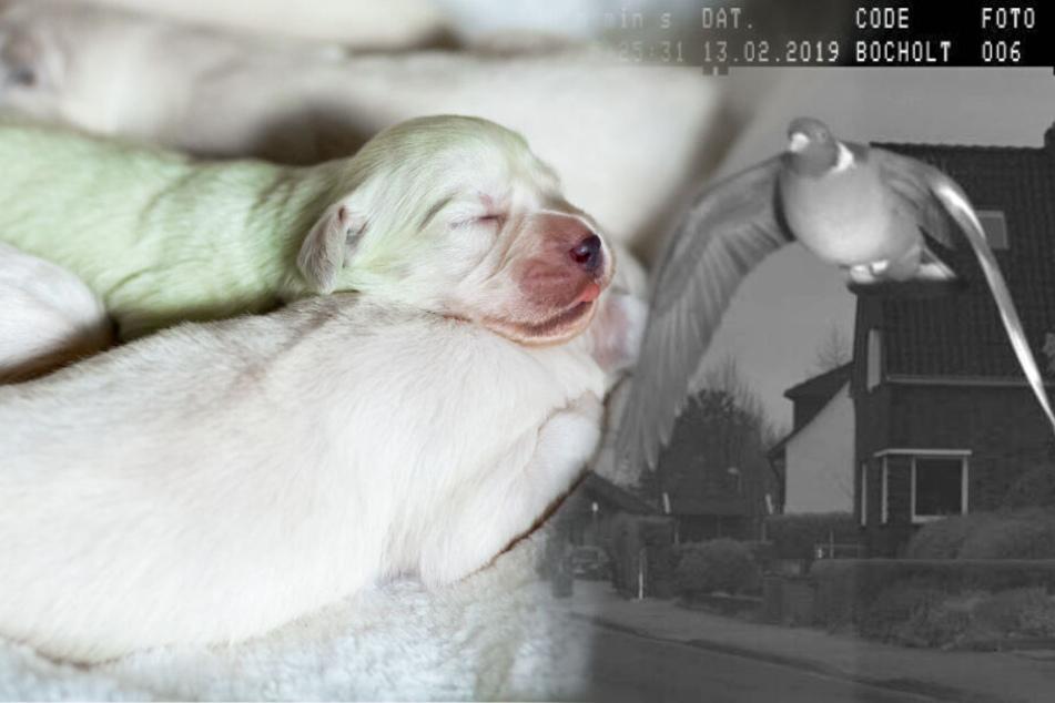 Grüner Hund und geblitzte Taube? Die verrücktesten Tier-Geschichten des Jahres