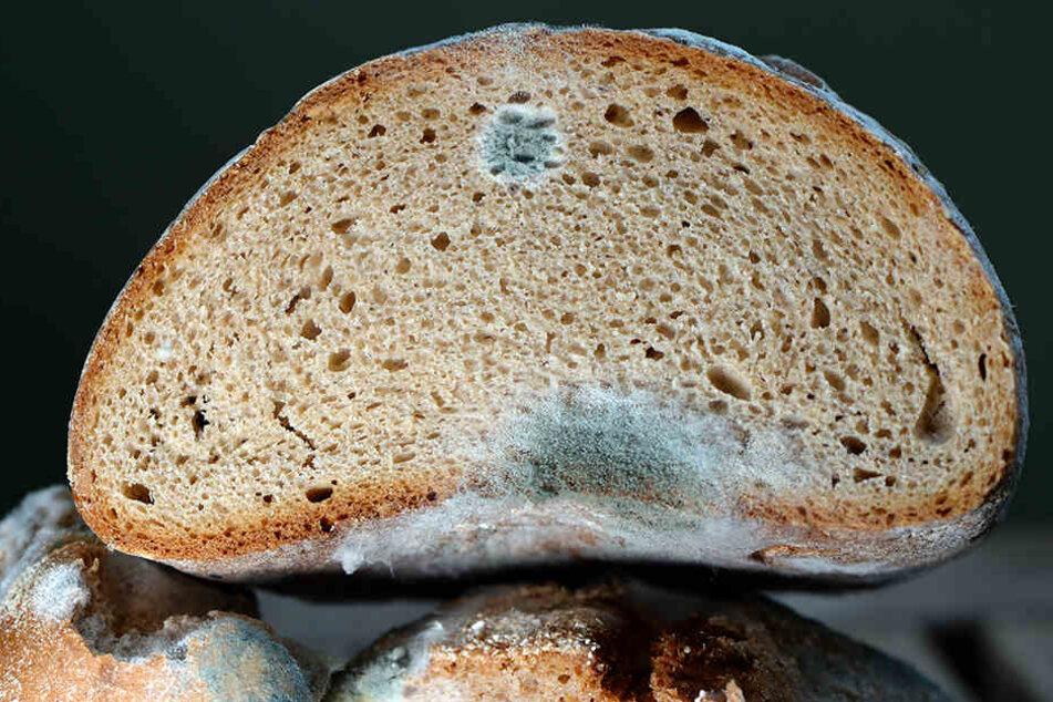 Schimmelbefall am Brot: Über 400.000 Menschen sterben jährlich nach dem Verzehr verdorbener Lebensmittel.