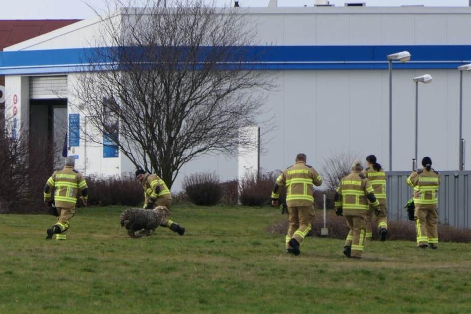 Zuvor war den Feuerwehrleuten das Schaf immer wieder entwischt.