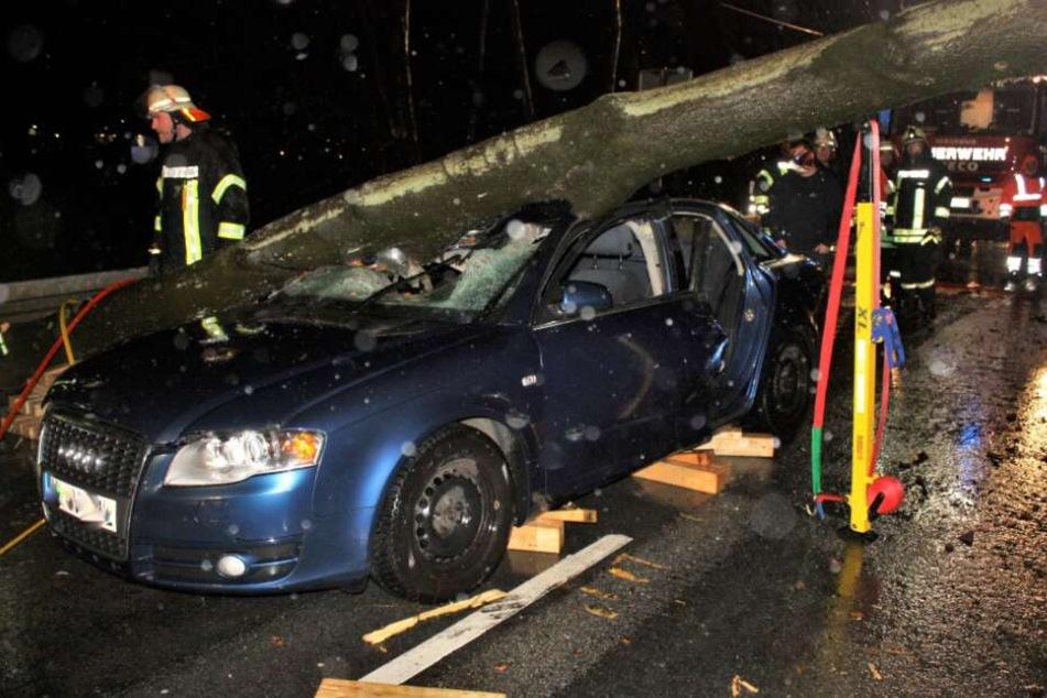 Der Baum hatte den Audi samt Insassen unter sich begraben.