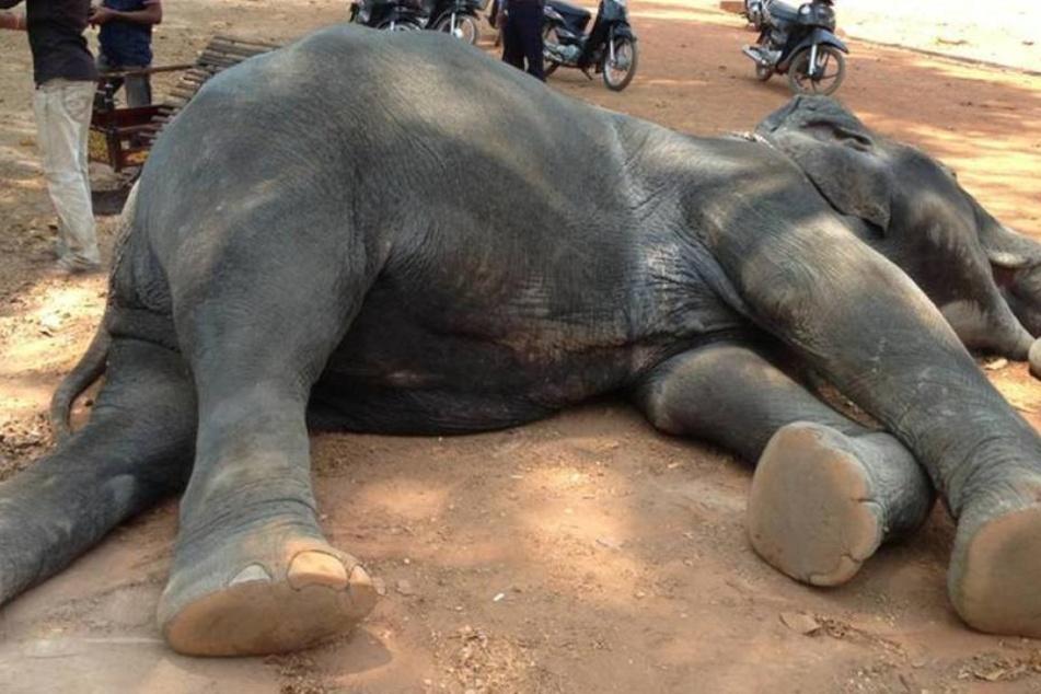 Großwildjäger von erschossener Elefantenkuh erdrückt und gestorben