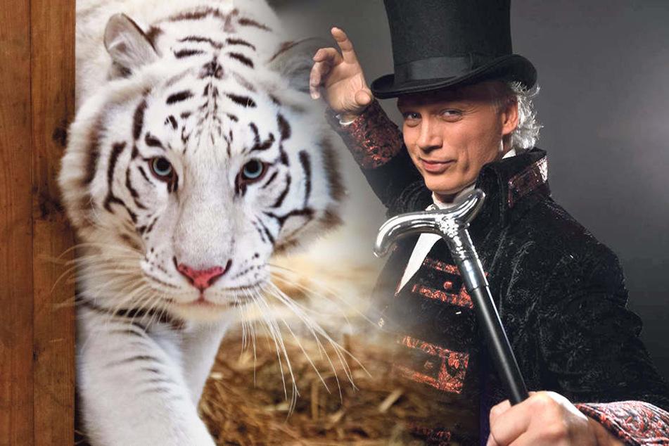Cirque FouFou! Sarrasanis neue Show mit Tiger, Panther und Co.