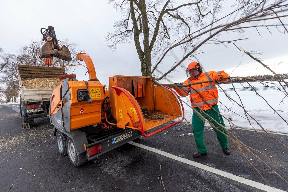Die Mitarbeiter der Straßenmeisterei Falkenstein müssen auf der S301 30 bis 35 beschädigte Bäume beschneiden.