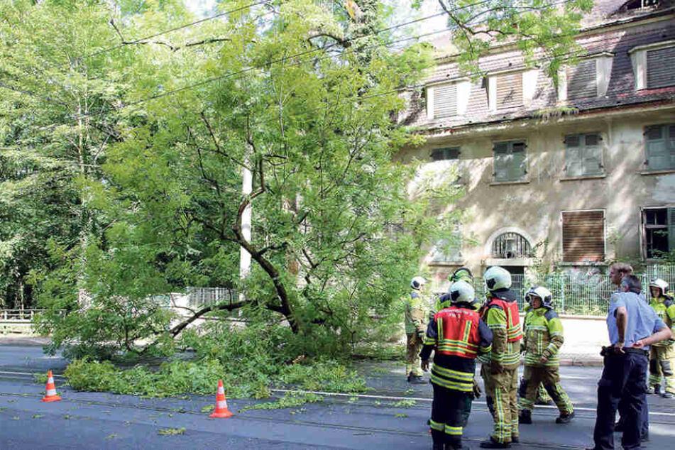 Die Feuerwehr musste ausrücken, um den am Lahmann-Sanatorium umgestürzten  Baum von der Straße zu räumen.