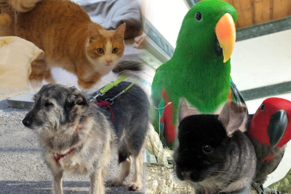 Schöne Papageien und flauschige Chinchillas: Diese Tiere suchen ein Zuhause