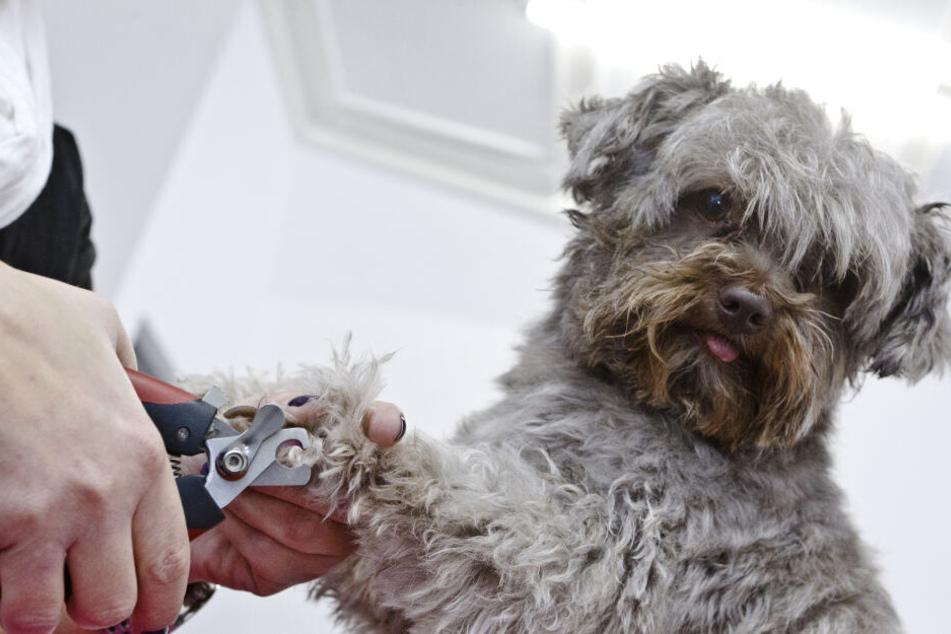 Hunde haben vor allem mit alterstypischen Gebrechen zu kämpfen. (Symbolbild)