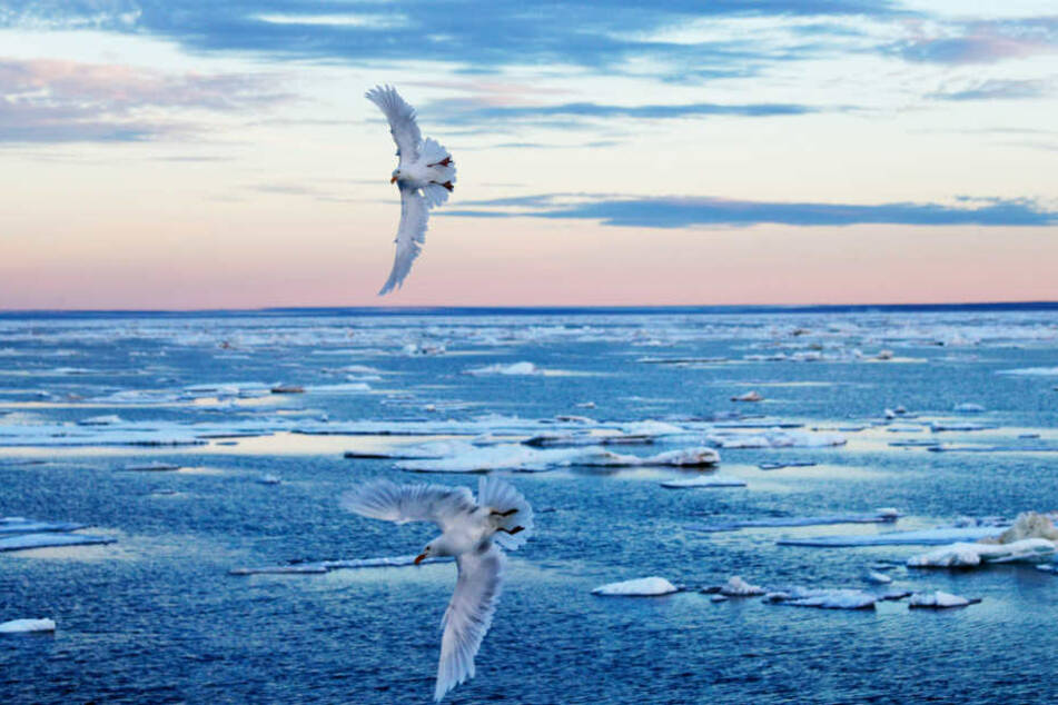 Aufgrund des Klimawandels schmelzen viele Gletscher in der Arktis.