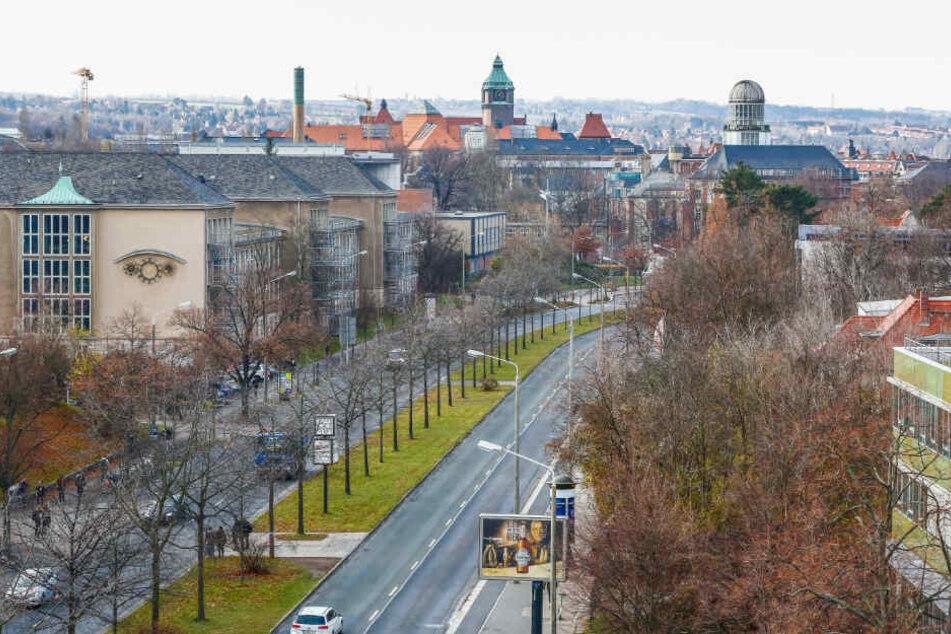 Wo jetzt noch Bäume stehen, soll einmal die Stadtbahn von Löbtau bis Strehlen rollen.