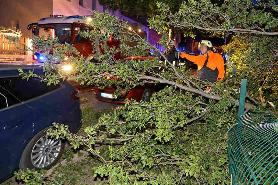 20-Meter-Ast bricht ab und kracht auf Autos: Straße gesperrt