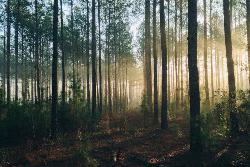 Das Unglück ereignete sich in einem Wald bei Ulm. (Symbolbild)