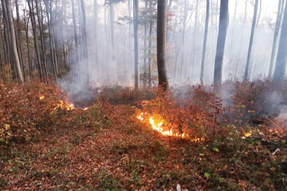 Das Feuer breitete sich im Wald aus.
