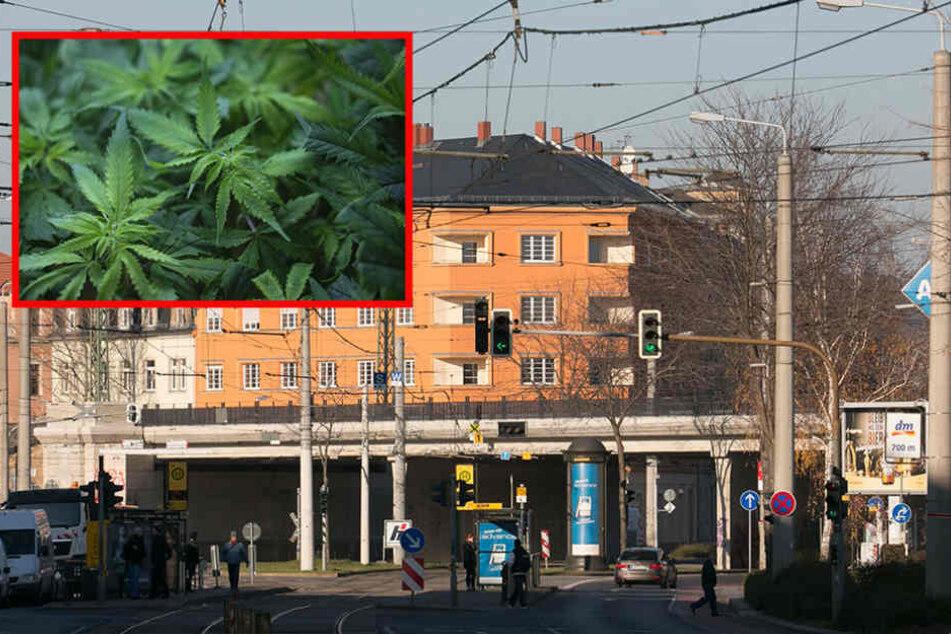 Auf der Großenhainer Straße klickten in einer Cannabis-Wohnung die Handschellen. (Symbolfoto)