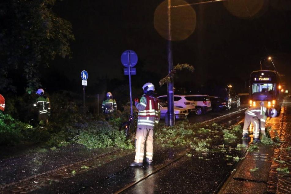 Vollsperrung auf der Warthauer Straße! Hier drohte ein morscher Baum, in die Oberleitung der Straßenbahn zu kippen.