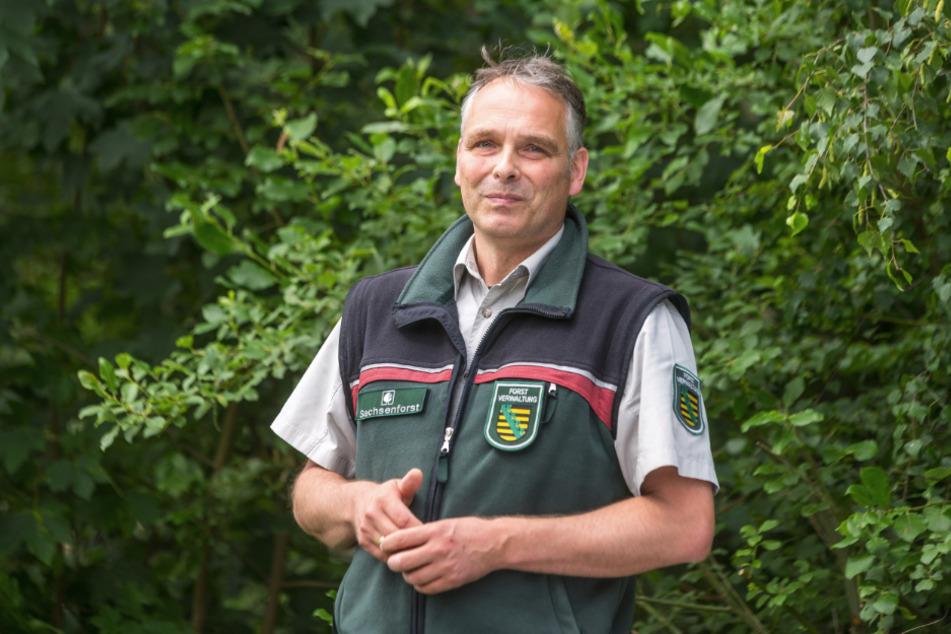 Forstbezirksleiter Uwe Borrmeister (41) setzt auf den Waldumbau: Weniger Fichten, weniger Borkenkäfer.