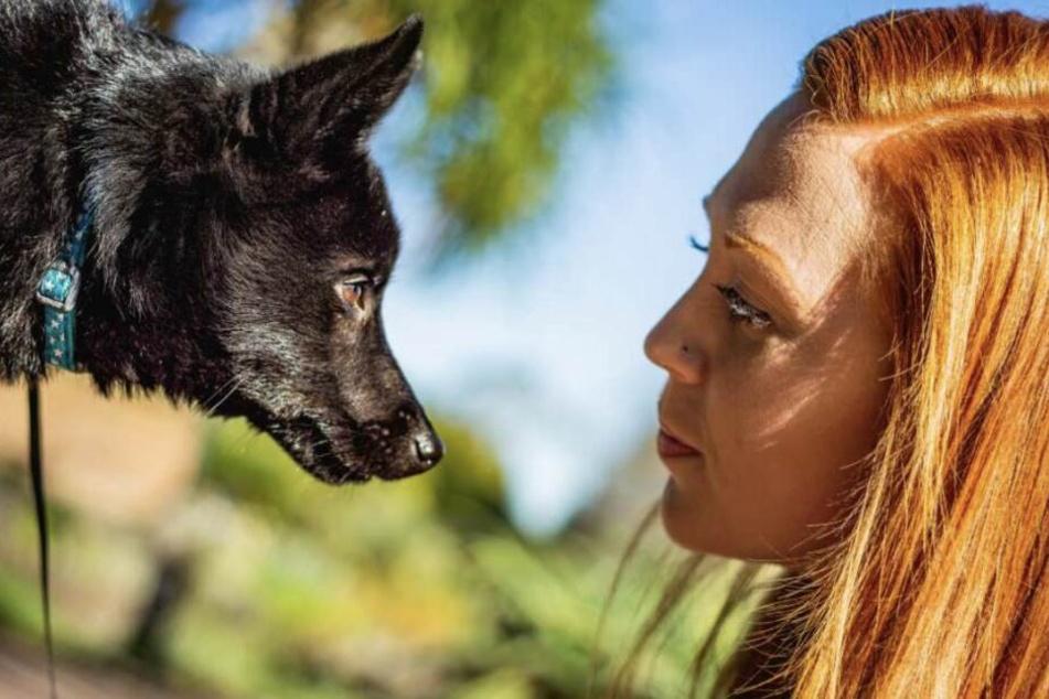 Hund und Mensch leben seit Jahrtausenden zusammen.