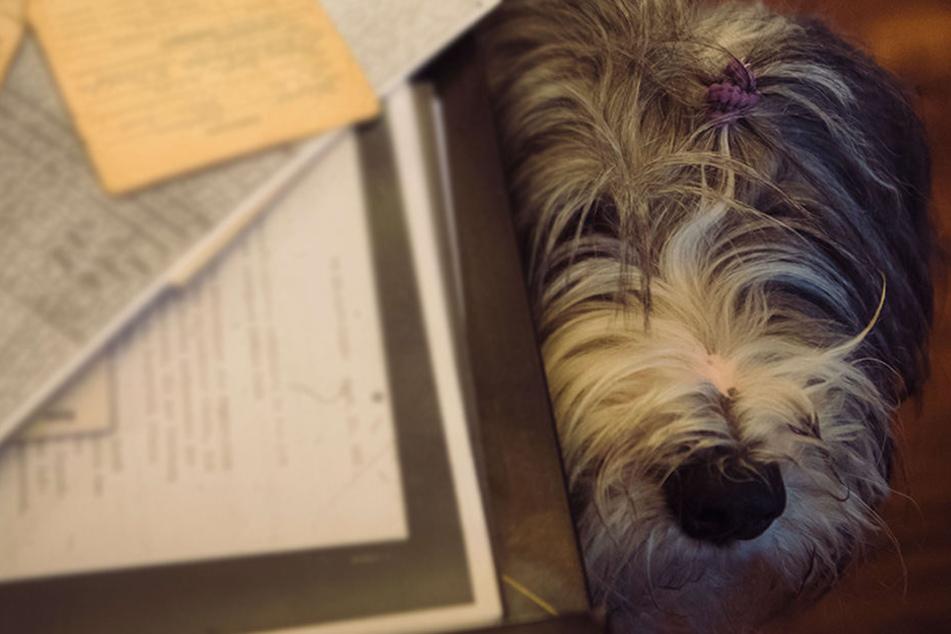 Ein Hund rettete sein betrunkenes Herrchen - und kam dann ins Tierheim (Symbolfoto).