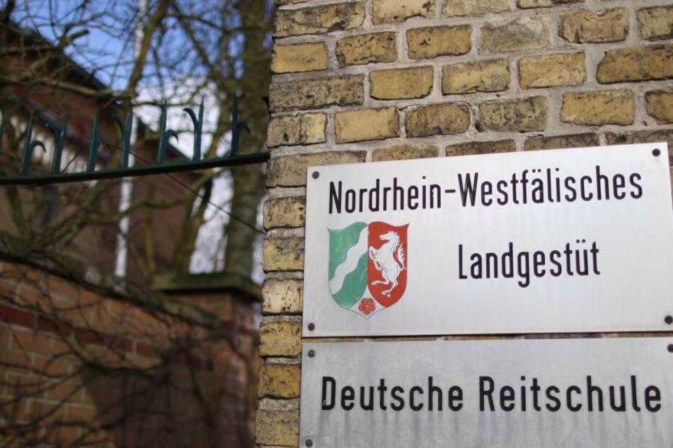 Im NRW Landgestüt soll einiges nicht mit rechten Dingen zugegangen sein.