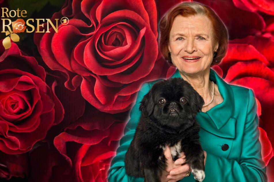 Rote Rosen: Totgeglaubte Brigitte Antonius zurück am Set