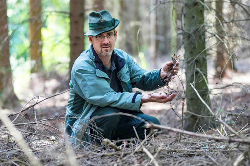 Waldbrandstufe 3: Ullrich Göthel (46), Forstbereichsleiter Grüna, warnt eindringlich vor Leichtsinnigkeiten nahe Waldgebieten.