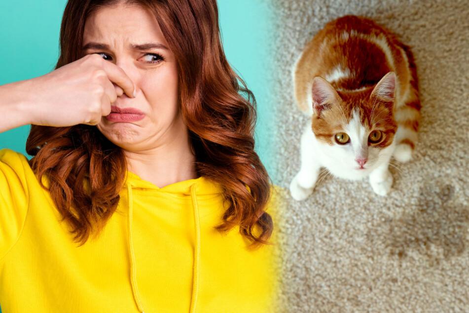 Katzenurin kann richtig übel riechen. Daher sollte man ihn schnellstens entfernen.