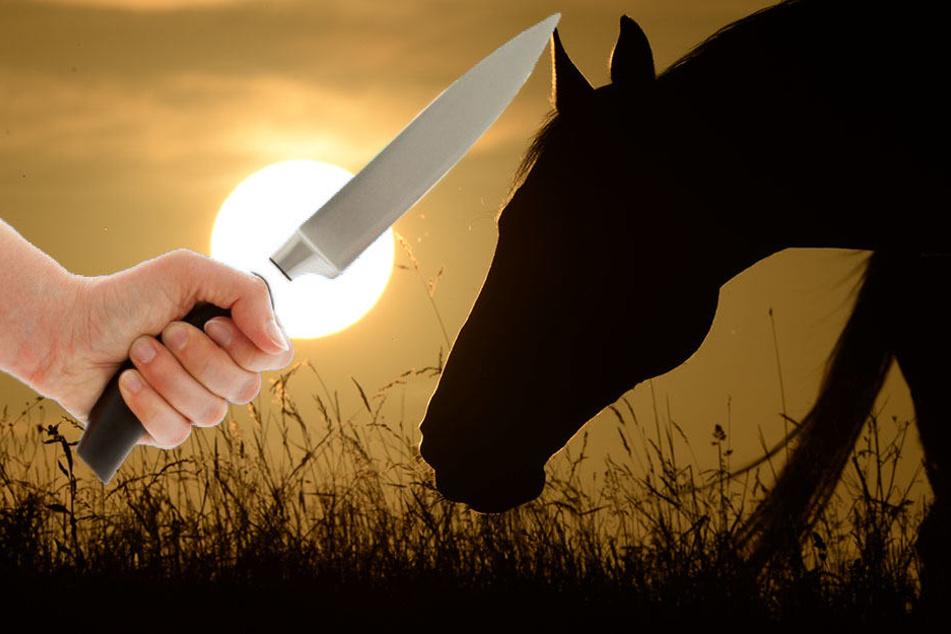 Unbekannter missbraucht und verletzt Pferde auf Koppel