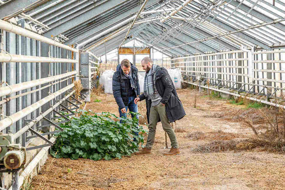 """Bio-Lebensmittel höchster Qualität sollen in der alten Gärtnereischule von Leckwitz in Permakultur produziert und unter dem Label """"Permagold"""" vertrieben werden."""