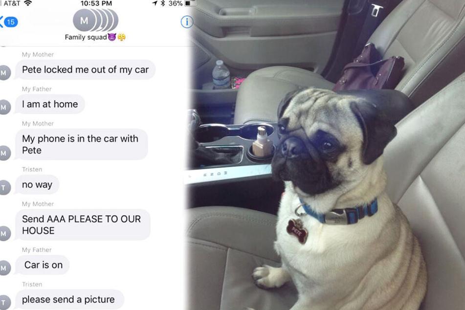 Frauchen will ins Auto einsteigen, doch sie hat die Rechnung ohne den Mops gemacht