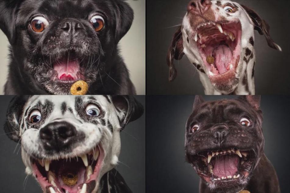 20.000 Teilungen! Dieses Hundevideo fasziniert das Netz