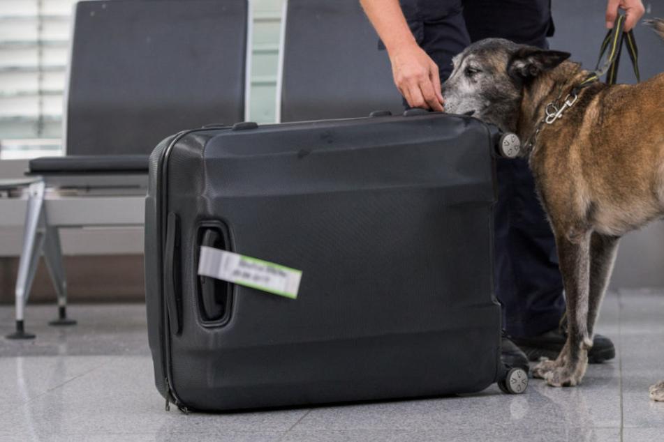 Einem Mann wurde am Flughafen München sein Gepäck zum Verhängnis. (Symbolbild)