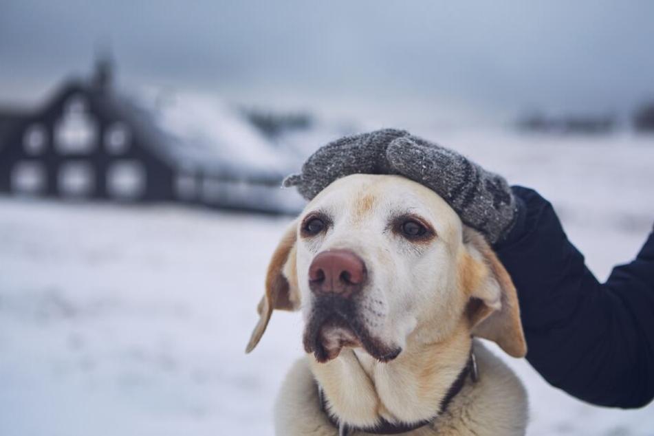 Wenn es draußen kalt ist, solltest Du Deinen Hund nicht lange warten lassen. (Symbolbild)