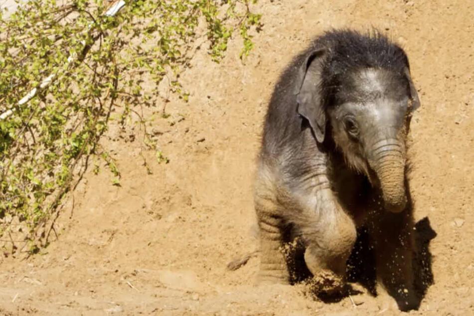 """""""Elefant, Tiger & Co."""": Endlich wieder Neuigkeiten vom Elefantenbaby"""