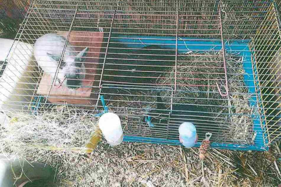 Diese drei Kaninchen waren in der Tasche eingesperrt.