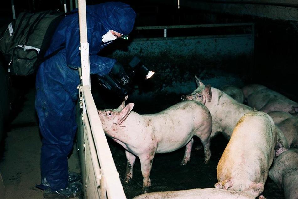 Tierschützer verschafften sich heimlich Zugang.
