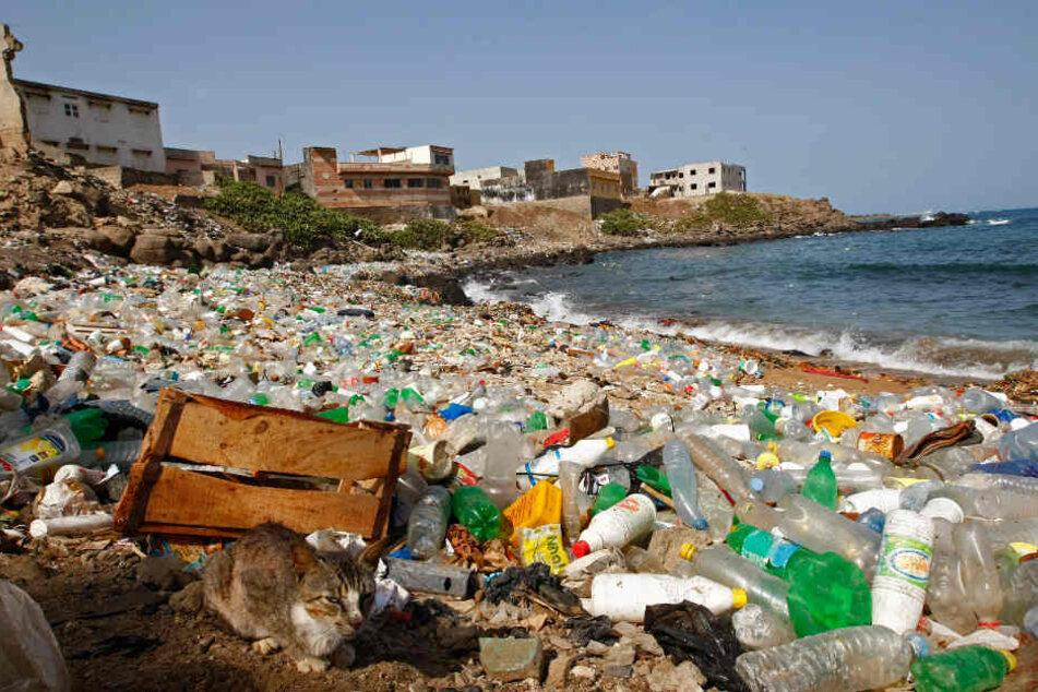 Müllteppich in Pazifik so groß wie Europa! Plastikmüll nimmt trotzdem weiter zu