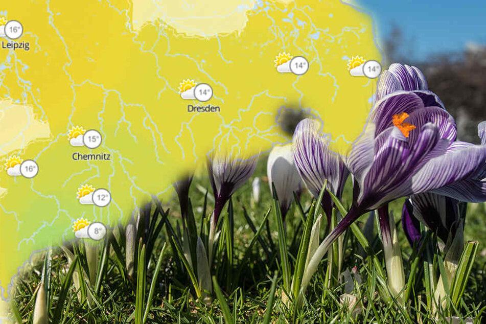 In den nächsten Tagen kommt der Frühling zurück nach Sachsen, Sachsen-Anhalt und Thüringen. (Symbolbild)