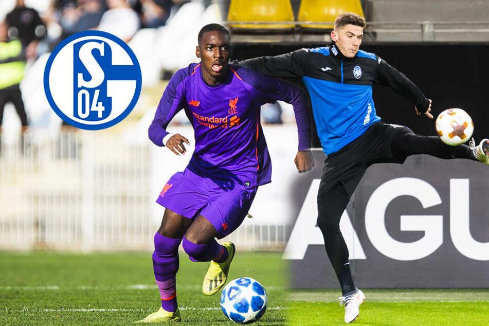 Schalke will deutschen Italien-Legionär! Kommt auch Liverpool-Talent?